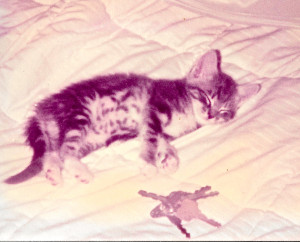 baby foxbat on bed